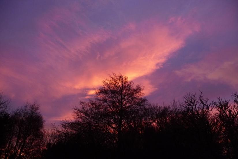 dawn tree tops